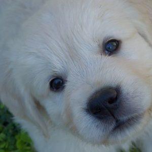 pupy+face