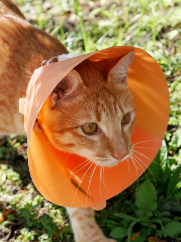 Spay and Neuter Services in Salt Lake City, UT